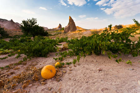 Many pumpkins in Cappadocia valley, Turkey  Stock Photo - 12835366