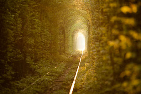 forest railway: Natural tunnel of love formed by trees in Ukraine, Klevan  Stock Photo