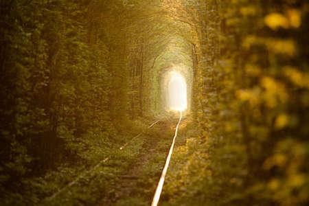 Přírodní tunel lásky tvořené stromy na Ukrajině, Klevan