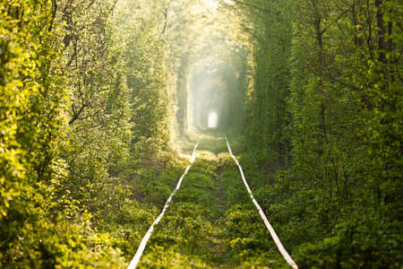 famous place: Natural tunnel of love formed by trees in Ukraine, Klevan  Stock Photo