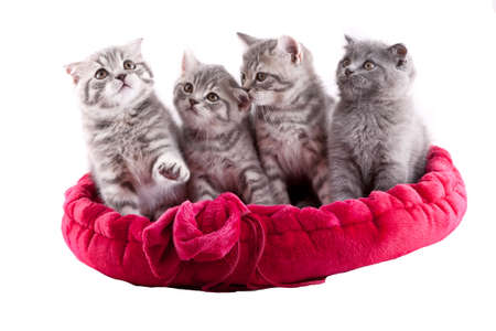 Group of adorable kittens playing on a white background. photo