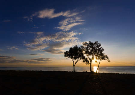 Sea landscape with great sunrise with trees and blue sea. photo