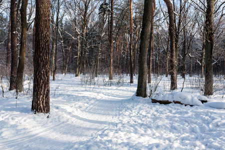 christmas grounds: Landscape of the winter forest. Lots of snow for cross-country skiing in forest.
