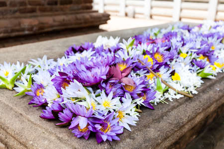 Colorful lotus flowers on the altar, Anuradhapura, Sri Lanka. Stock Photo