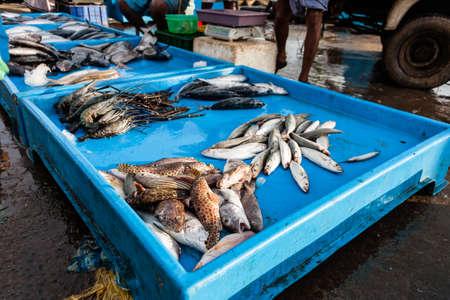 Fresh raw fish at market in Sri Lanka. Stock Photo