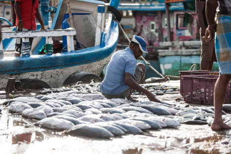 Tangalle, Sri Lanka - January 31, 2017: Crowds of people on fish market. People buying and selling fresh raw fish. Editorial