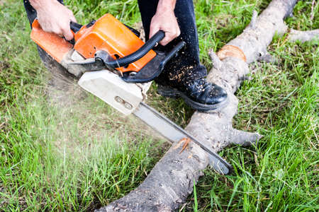 Sawdust flies as a man cuts a fallen tree into logs.
