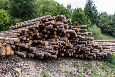 Wood timber logs in a pile at a sawmill. Deforestation ecological and global warming problem.