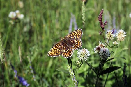 Bright and making colorful butterfly on green meadow photo