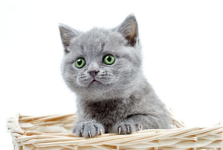 kitty with green eyes sits in a basket photo