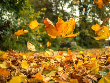 Les feuilles jaunes qui tombent des arbres sur une journée d'automne ensoleillée Banque d'images - 46156198