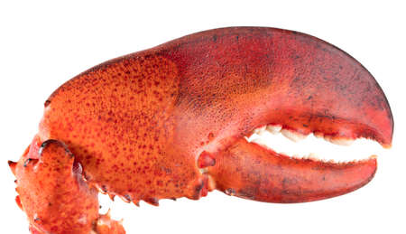 Red lobsters claw on white background Banco de Imagens