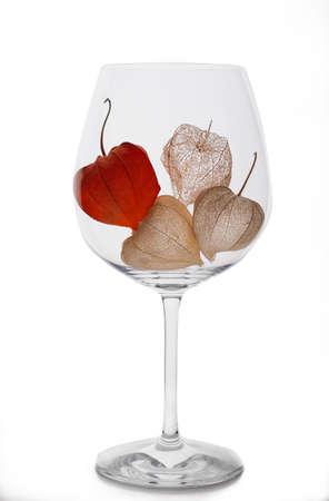 Physalis in einem Weinglasskelett auf weißem Hintergrund Standard-Bild