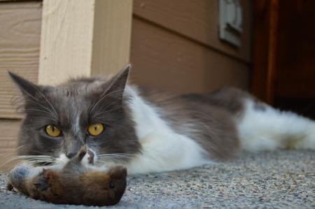 kill: Cat guarding his kill