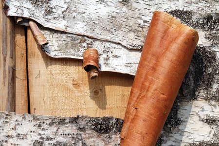Birch bark torn photo