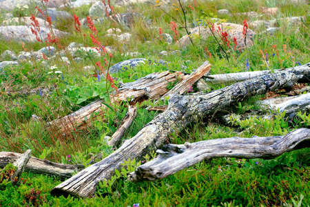 plurality: A plurality of branches for the fire, piled among green grass