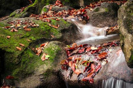 slower: Water flow among the green forest day, fallen leaves on the rocks, all filmed at slower shutter speed