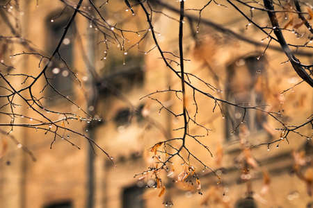 Autumn in the city - a drop of rain on the branches of a fallen leaves closeup on building background photo