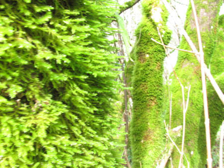 mossy: Mossy Trees