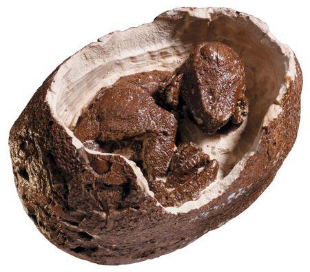 fossil: dinosaurs egg