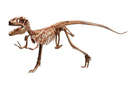 fossil: dinosaur skeleton