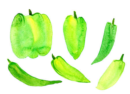 A large sweet green pepper on a white background, isolated. Watercolor