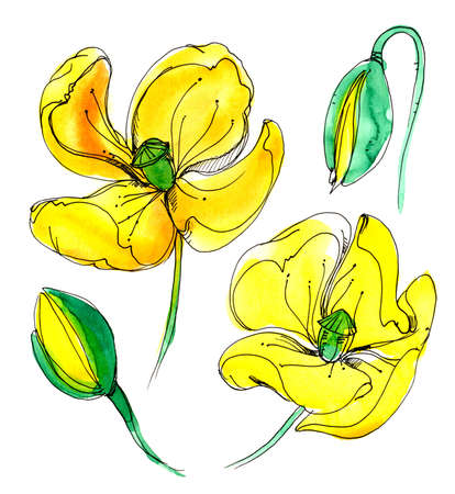 scribe: Wildflower poppy flower in a watercolor style isolated.