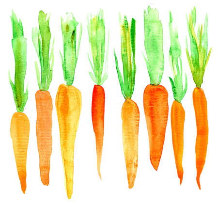 Bright carrot. Watercolor. Isolated on white background Banco de Imagens