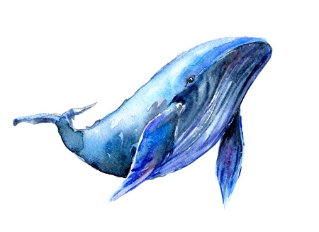 Blue whale watercolor. Underwater fauna