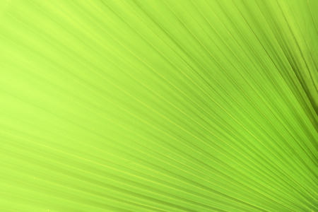 Close up colorful nature view green leaf on blurred greenery background and sunlight in the garden for decorative website and wallpaper. Natural and ecology copy space concept. Stock Photo