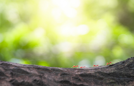 Close up branch of tree and orange little ants with sunlight in the garden and forest. It is freshness and copy space concept for lay out goods to online advertisement.