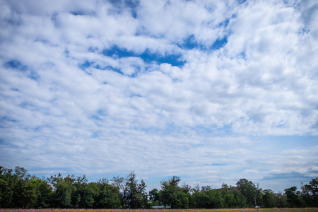 View of beautiful clouds sky with meadow green tree and plain landscape use for wallpaper and backdrop