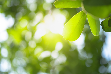 Beautiful leaf with yellow sunlight on greenery blurred background in morning time.Freshness concept use for decorative wallpaper and template of website magazine. -Image. Archivio Fotografico