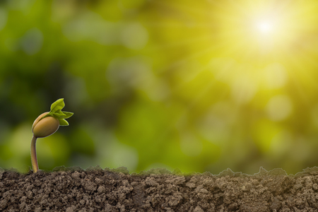 Closeup of just germinate from soil with greenery blurred background and sunlight. Ecology and planting concept.-Image. Stock Photo
