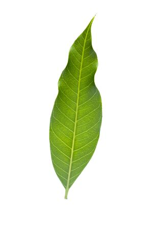 Isolated of green leaf collection on white background Zdjęcie Seryjne