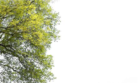 Isolated of tree branch on white background and clipping path for ecology decoration website and magazine.- Image.