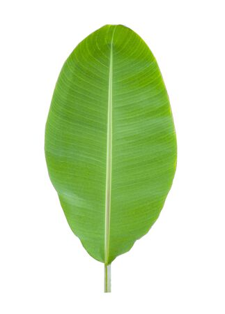 Banana leaf collection on white background. Clipping path and Isolate. 스톡 콘텐츠