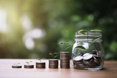 Increase trend graph of coins stacking with tree growth on greenery background. Dividend and profit from saving and investment concept.