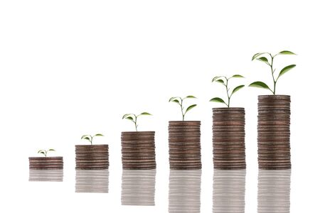 Increase trend graph of coins stacking with tree growth on white background. Dividend and profit from saving and investment concept. Zdjęcie Seryjne