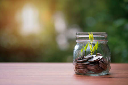Coins inside of jar with tree growth on greenery background. Dividend and profit from saving and investment concept.