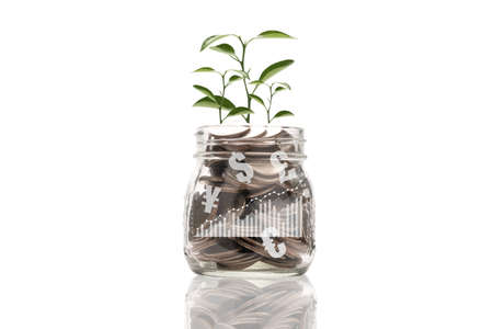 Coins inside of jar with tree growth on white background. Dividend and profit from saving and investment concept. 版權商用圖片