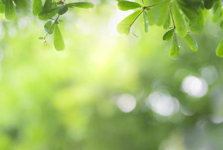 Close up view of green leaf on greenery blurred background and sunlight  in garden using for natural green plant ,ecology and copy space for wallpaper and backdrop. Zdjęcie Seryjne - 152349473