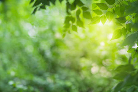 Close up view of green leaf on greenery blurred background and sunlight  in garden using for natural green plant ,ecology and copy space for wallpaper and backdrop.