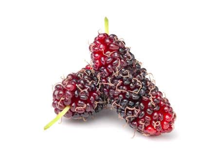Isolated of fresh organic mulberries fruit on white background Zdjęcie Seryjne