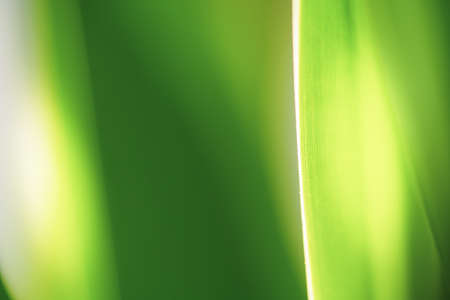 Close up beautiful natural green leaf and sunlight for background and texture.