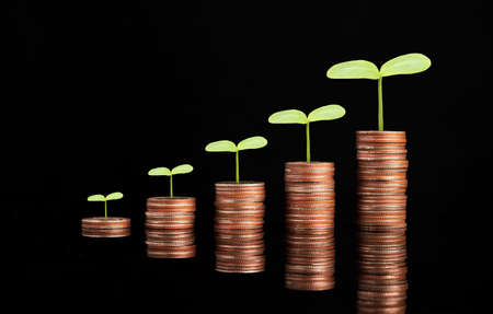 Growth of coins stacking with plant  on black background, money saving and investment profit growth concept.