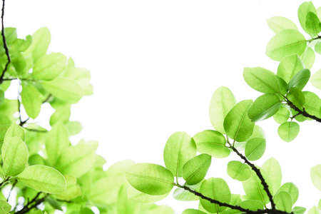 Closeup beautiful view of nature green leaf on greenery blurred background with sunlight and copy space. It is use for natural ecology summer background and fresh wallpaper concept.