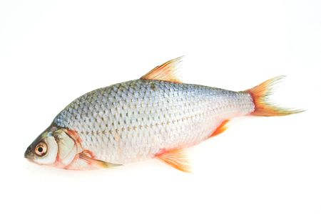 carp isolated on white background Stock Photo