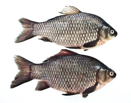 two carps isolated on white Stock Photo - 4198829