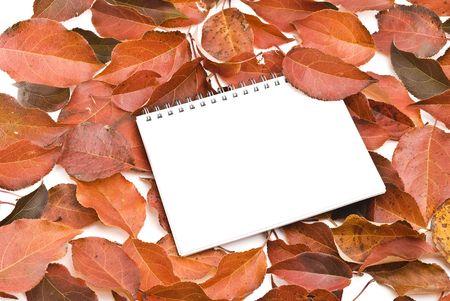 Spiral notepad  on autumn leafs photo
